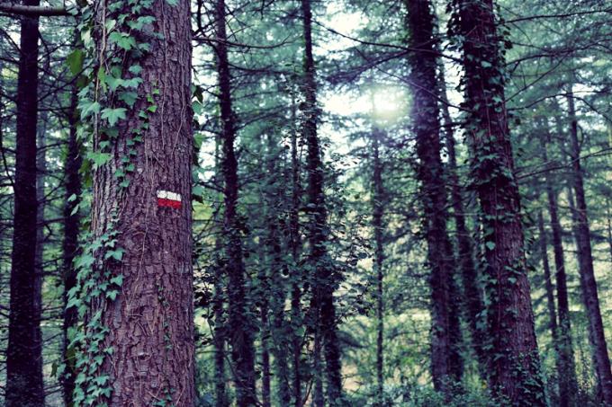 ❥ De bosques yternura