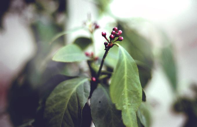 ❥ Todo florece