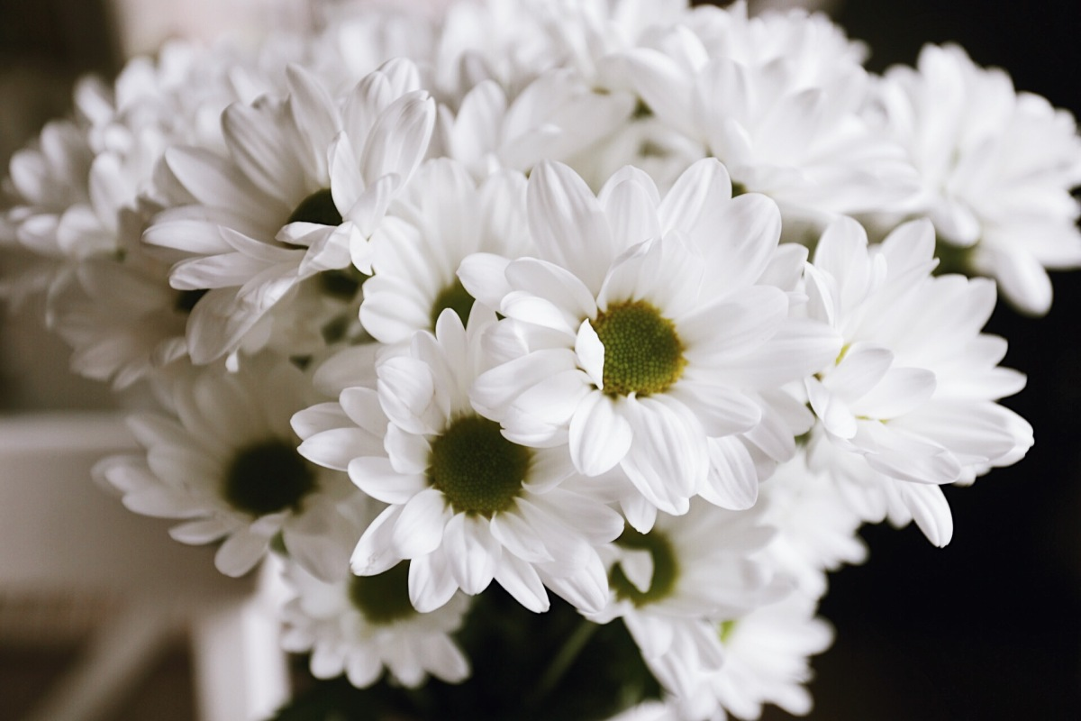 ❥ Flores para un lunes