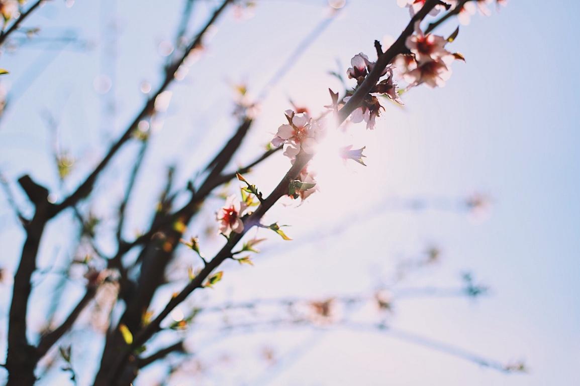 ❥ Flores para unlunes