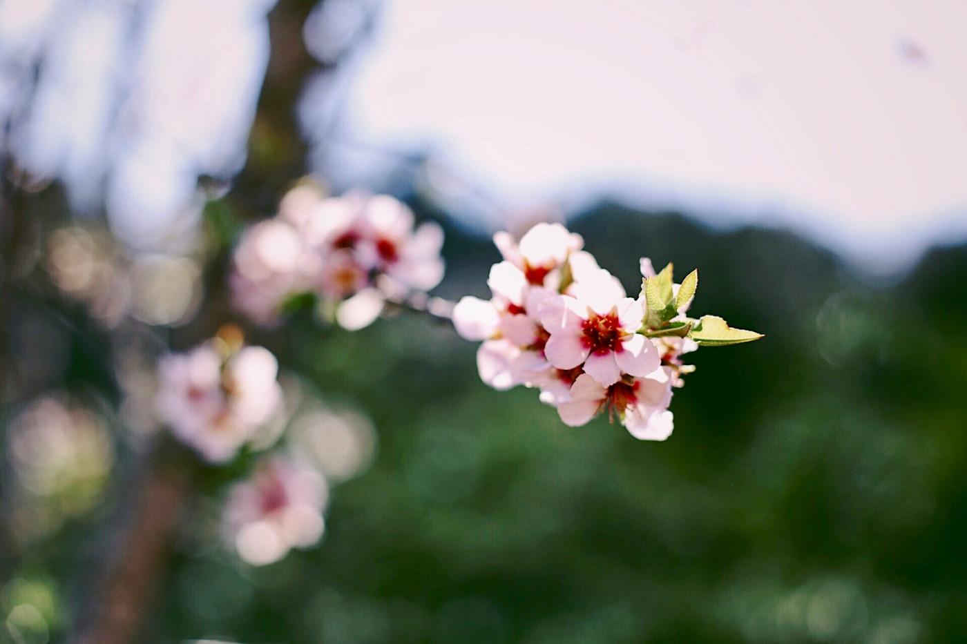 flors2